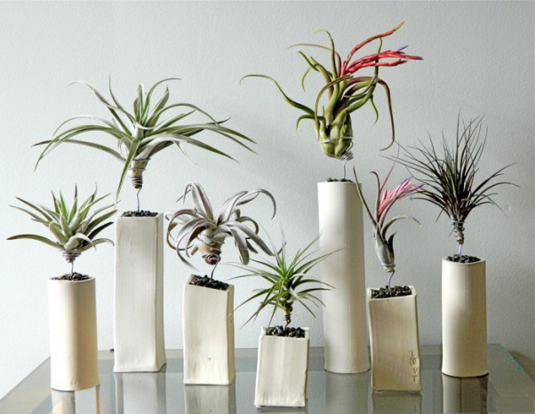 plantele-in-design-interior-01