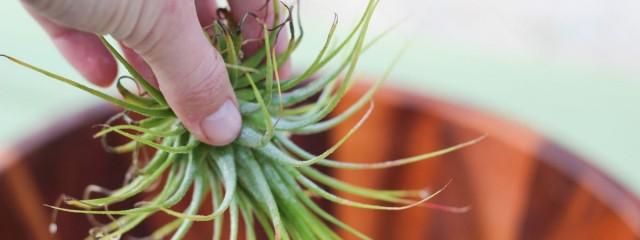 plantele-de-aer-un-nou-trend-in-designul-de-interior-3