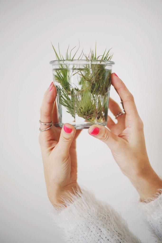 plantele-de-aer-un-nou-trend-in-designul-de-interior-4