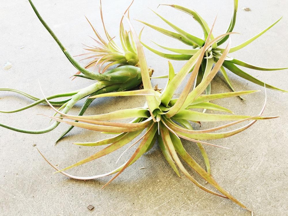 plantele-de-aer-un-nou-trend-in-designul-de-interior-5