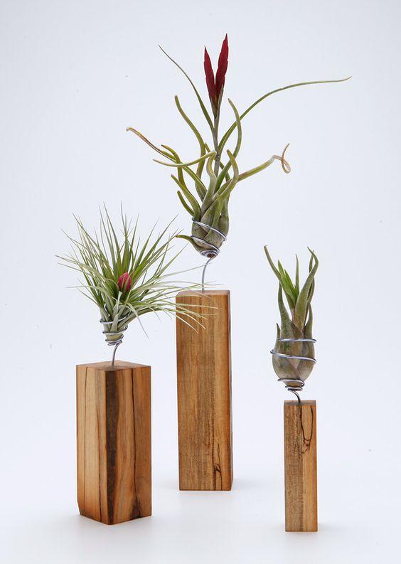 plantele-de-aer-un-nou-trend-in-designul-de-interior-6