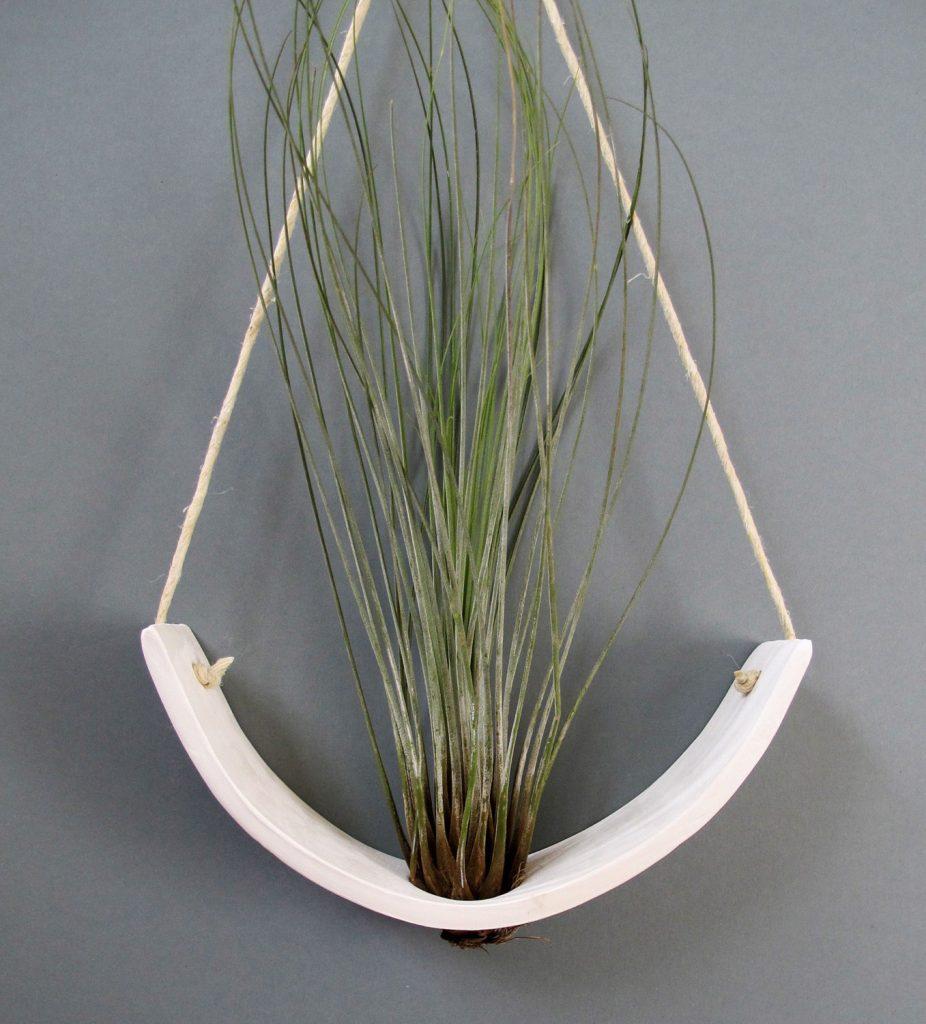 plantele-de-aer-un-nou-trend-in-designul-de-interior-9